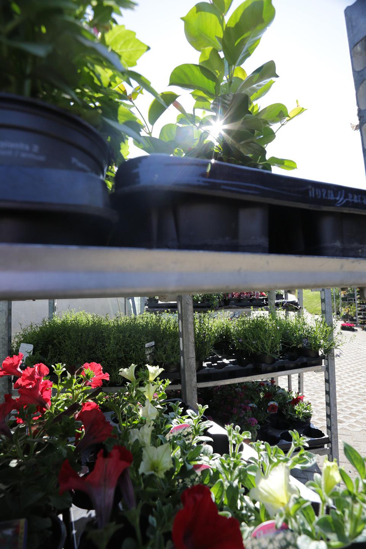 Loschetter philippe entreprise de jardinage tuntange for Entreprise de jardinage